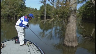Best time to Fish Near Cypress Trees