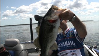 Catching Big Bass in St. Johns River