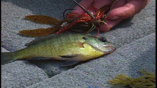 Colored Baits that Match what Bass Eat