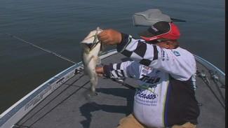 Largemouth Bass Lures