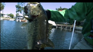 Sight Fishing with Shaw Grigsby on Harris Chain of Lakes
