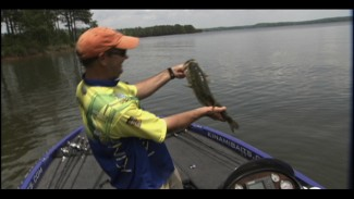 Tips for Fishing Laydowns