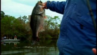 Sight Fishing Technique