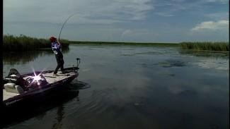 Bass Fishing on the Louisiana Delta