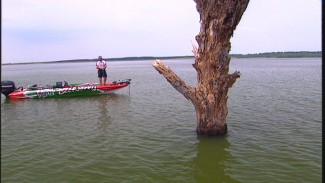 Tips for Bass Fishing Near Standing Timber