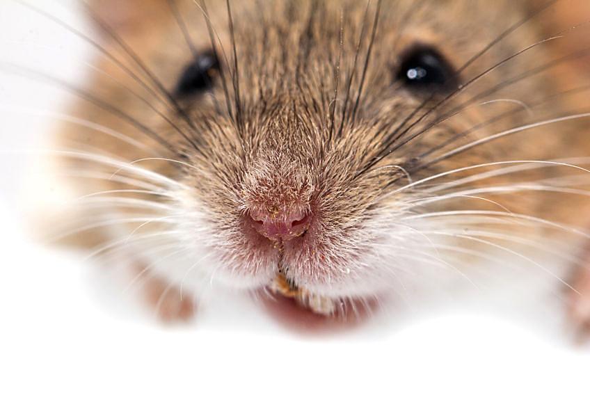 QA-Mouse-1