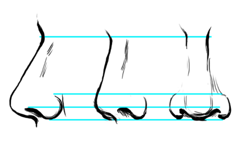 drawing nose diagram