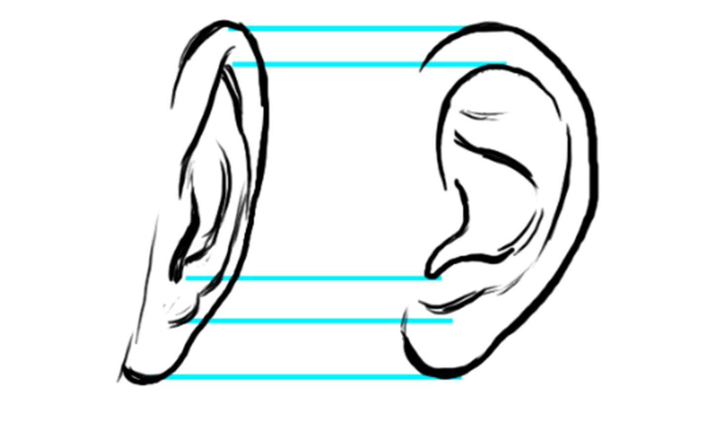 drawing ears diagram