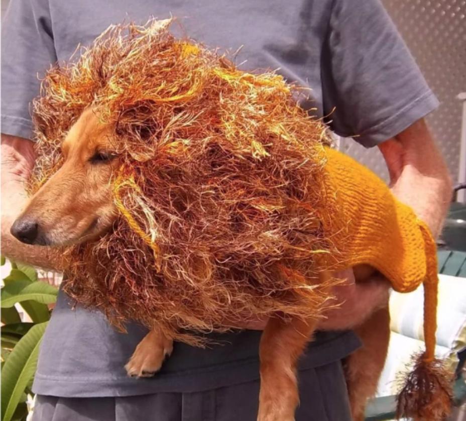 dog wearing a yarn lion mane