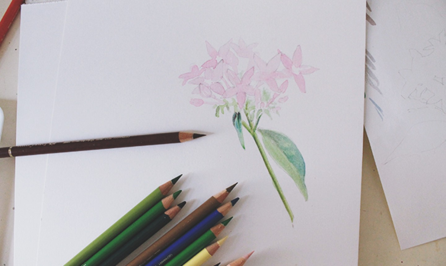 layering colored pencil onto flower drawing