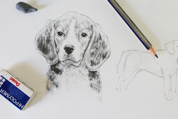 graphite beagle dog drawing