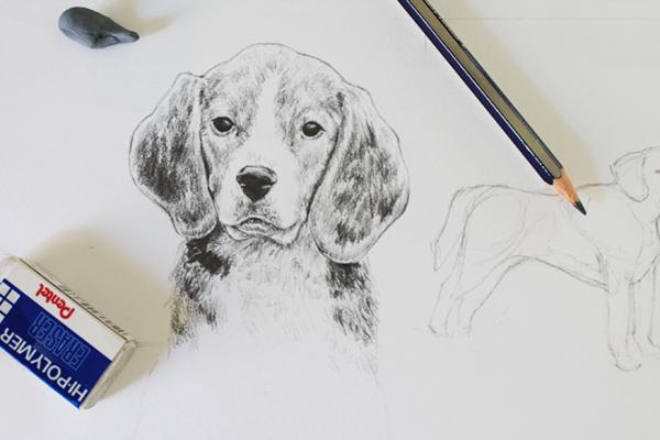 graphite beagle