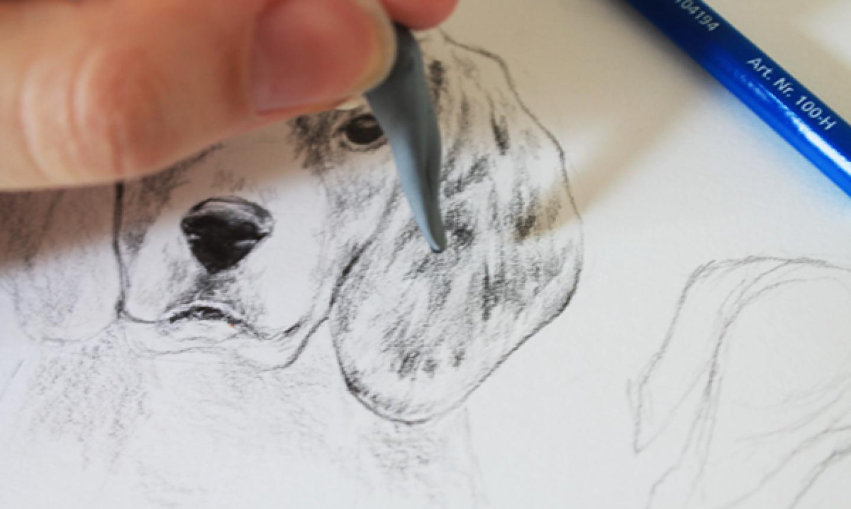 erasing dog fur in drawing