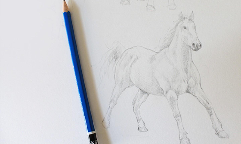 shading horse