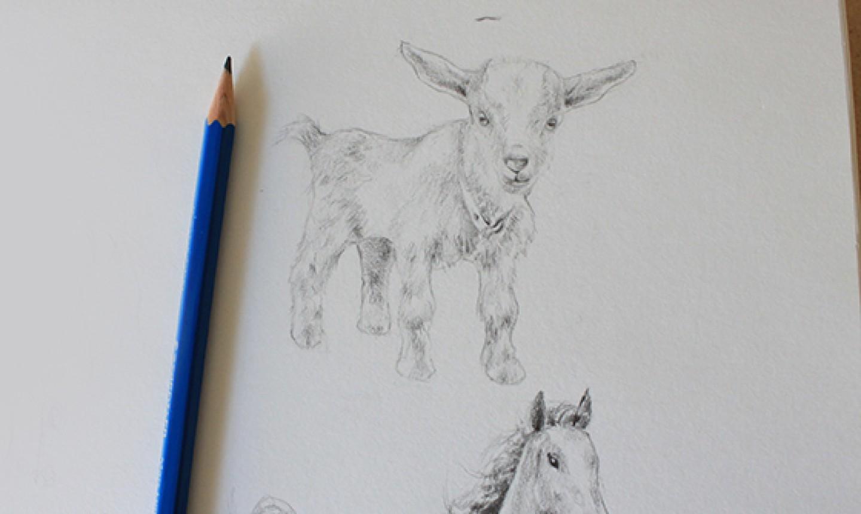 shading goat fur