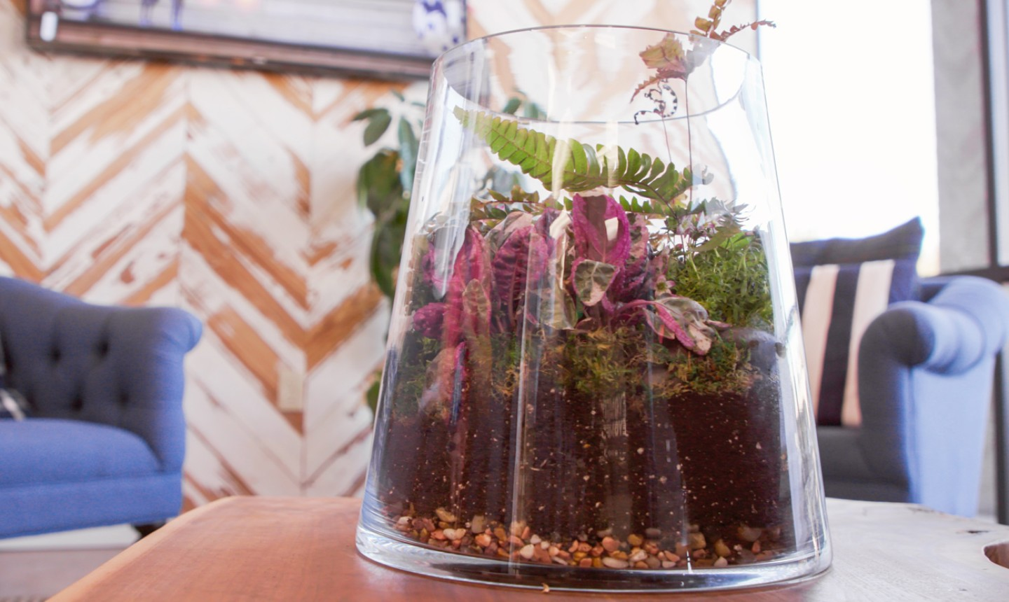 How To Make A Diy Terrarium Everything You Need To Know