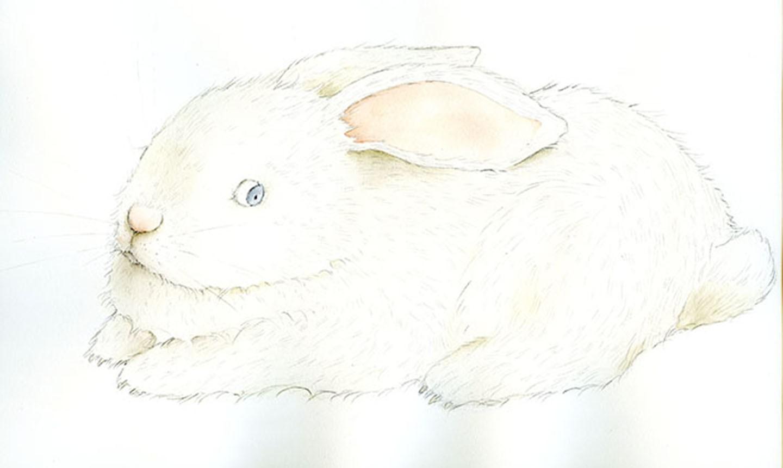 painted white rabbit