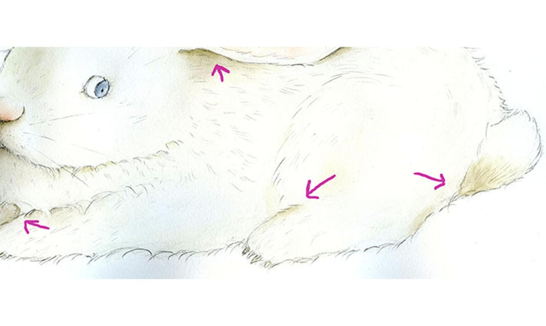 shading bunny body