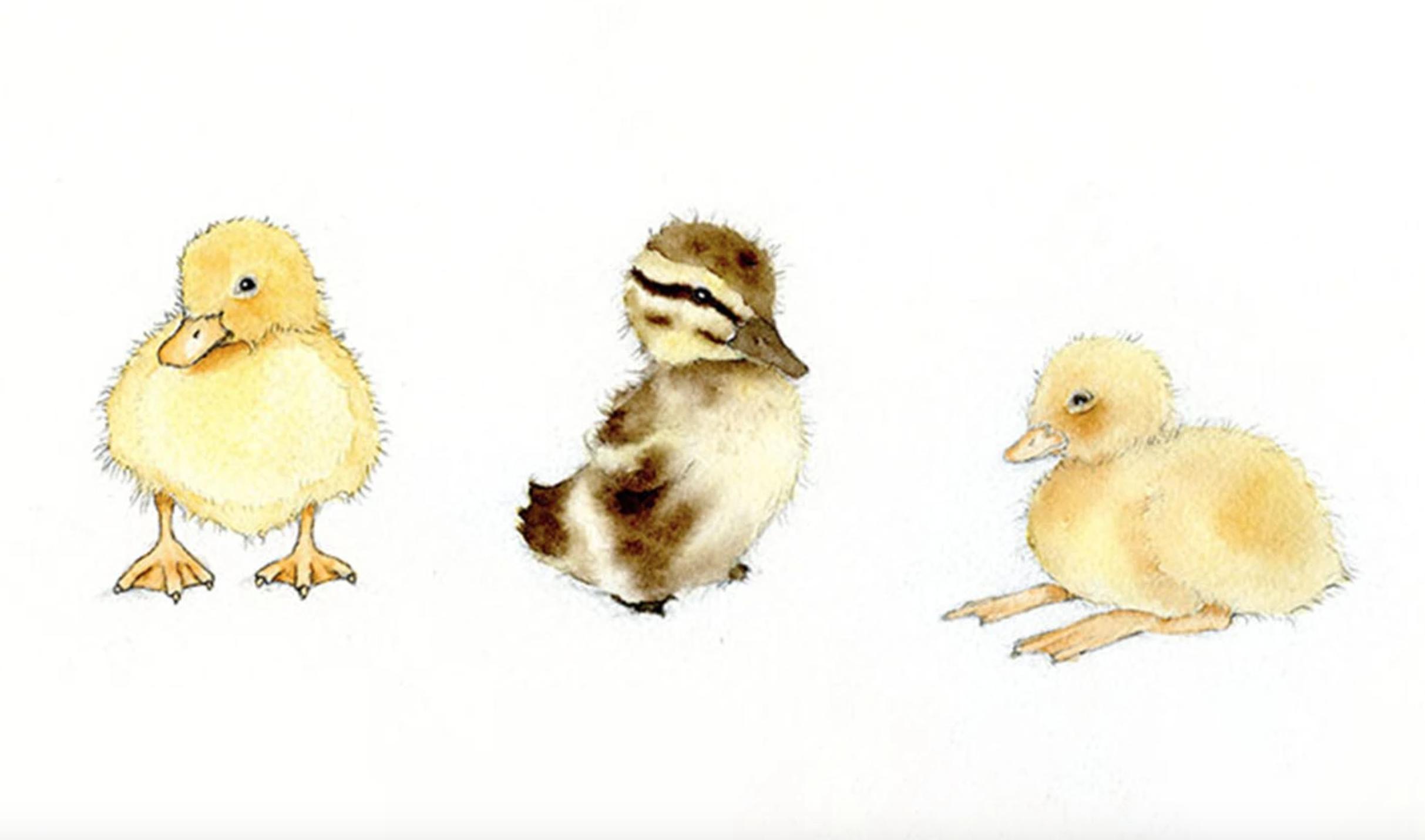 painted ducklings