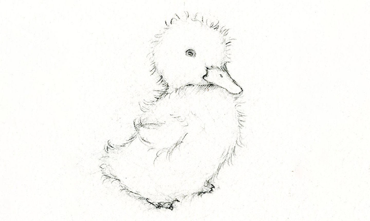 sketched duckling