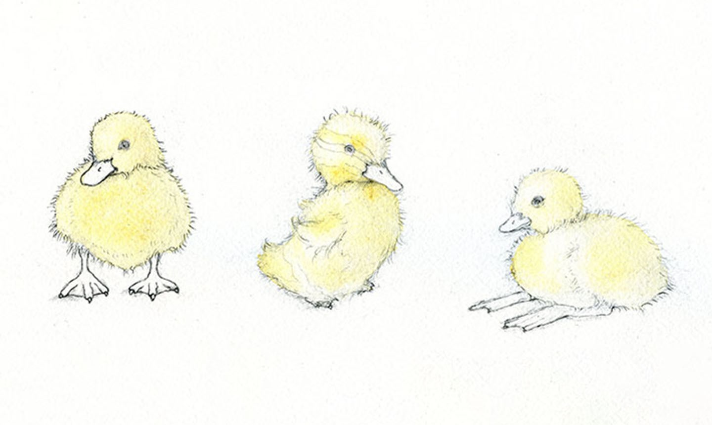 duckling watercolor wash