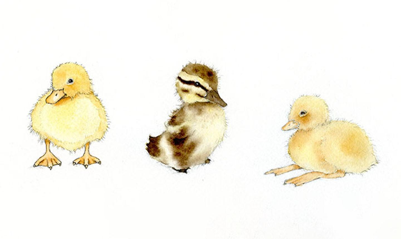 detail ducklings