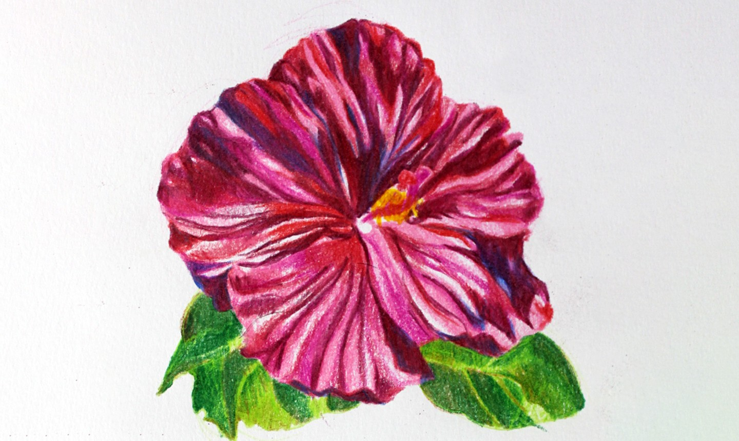 pink colored pencil flower