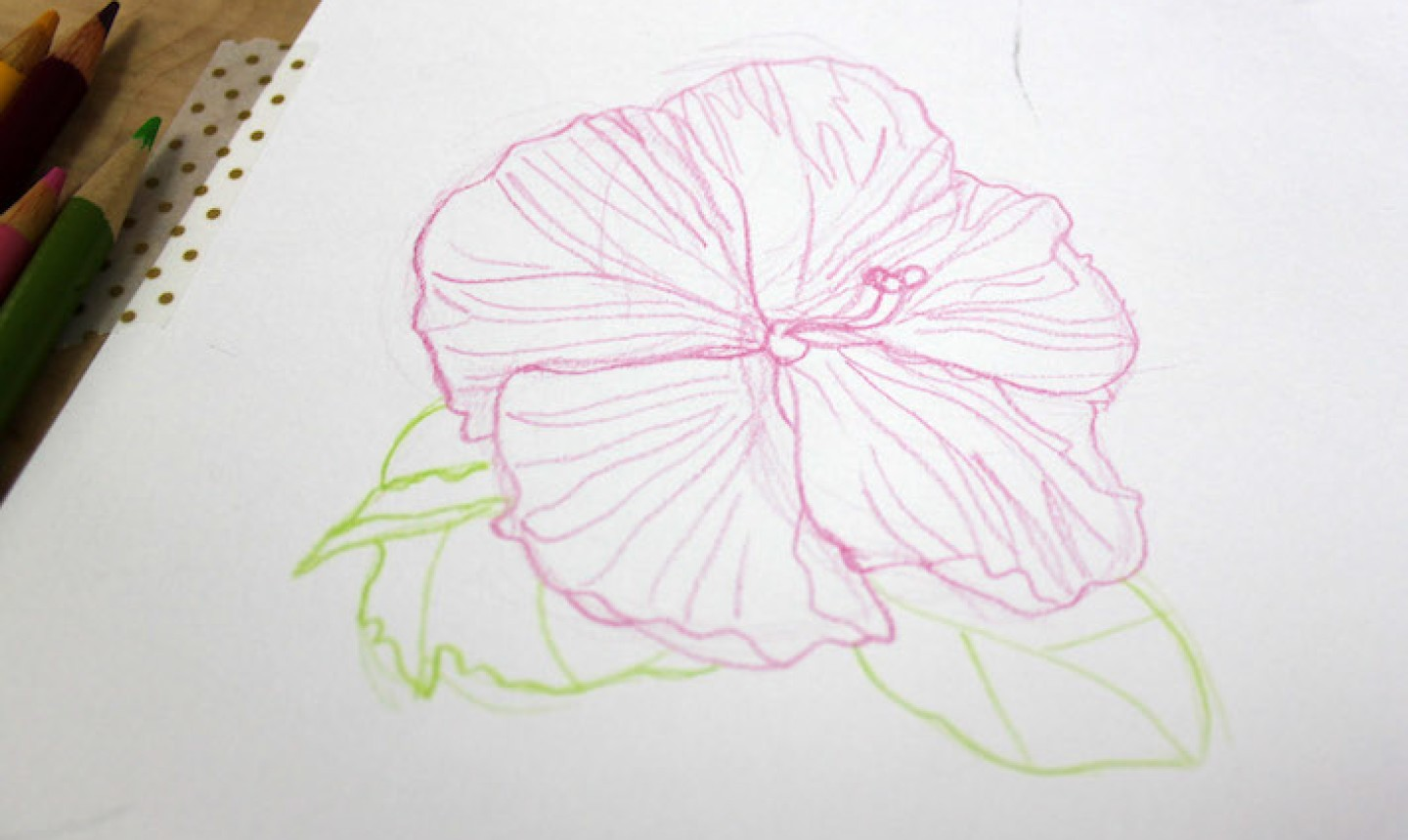 detail sketch of colored pencil flower