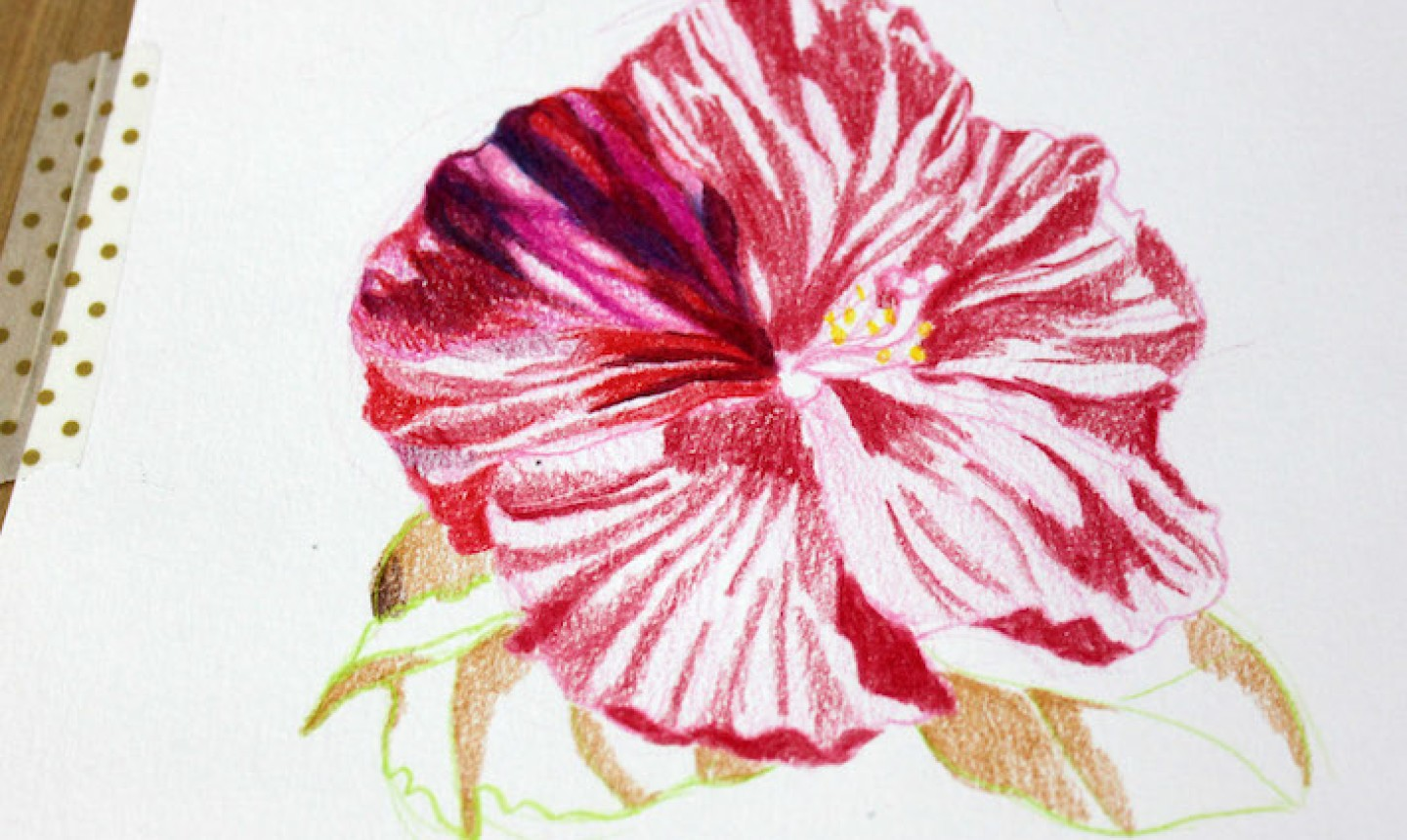colored pencil flower in progress
