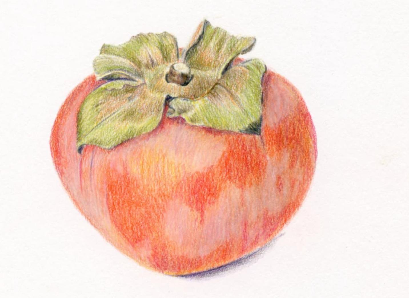 colored pencil persimmon