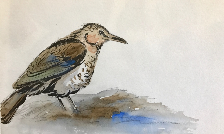 brush pen bird