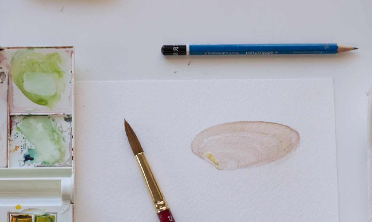 watercolor brown seashell