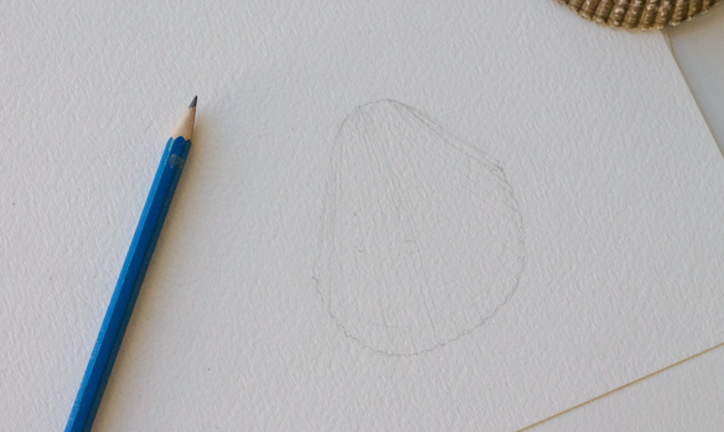 sketching second seashell