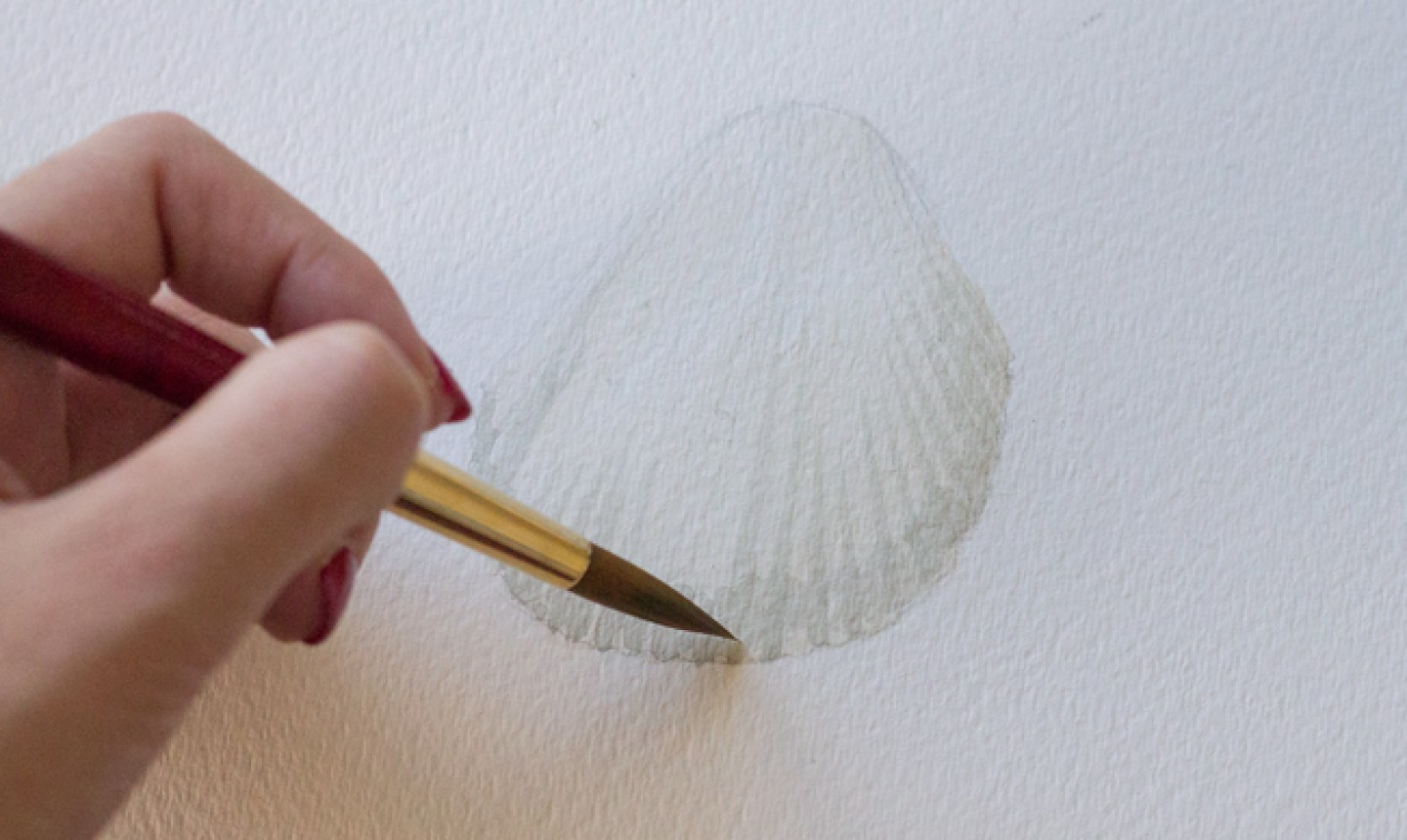 painting seashell shadows