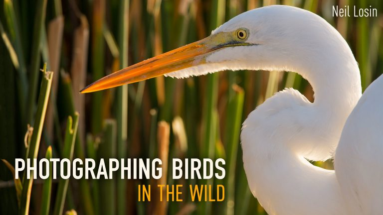 Photographing Birds in the Wild