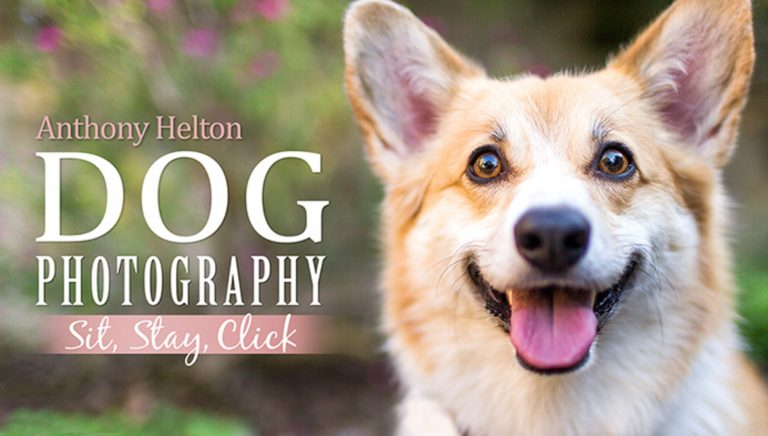 Dog Photography: Sit, Stay, Click