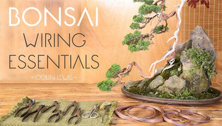 Bonsai Wiring Essentials