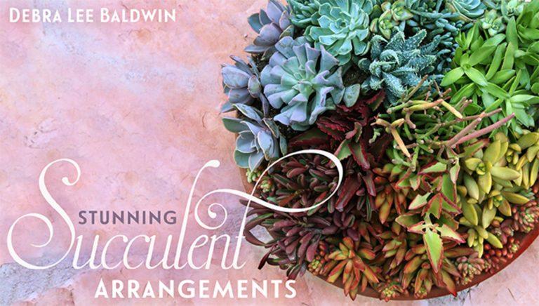Stunning Succulent Arrangements