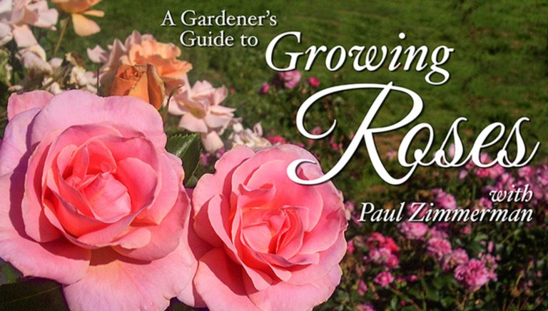 A Gardener's Guide to Growing Roses