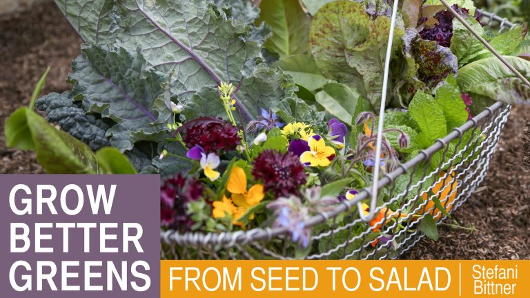 Grow Better Greens: From Seed to Salad