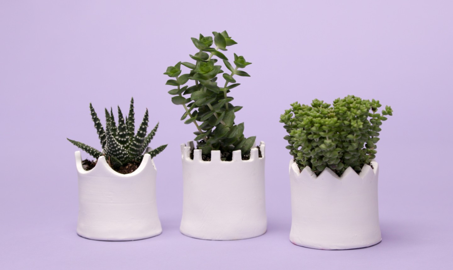 3 white planters with plants