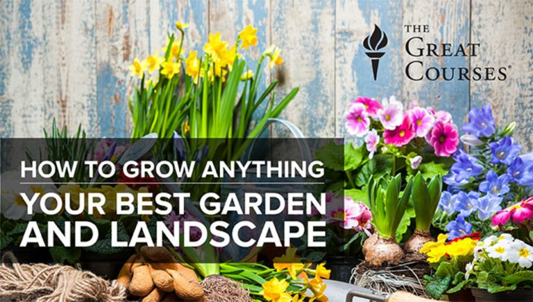 How to Grow Anything: Your Best Garden & Landscape