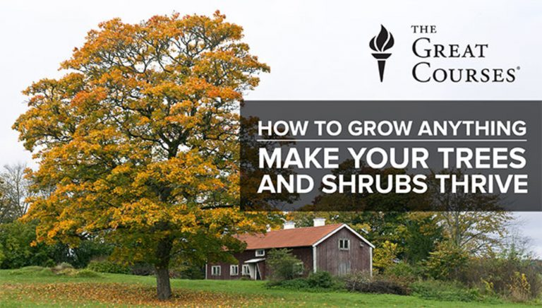 How To Grow Anything: Make Your Trees & Shrubs Thrive