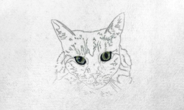 needle felted cat eyes
