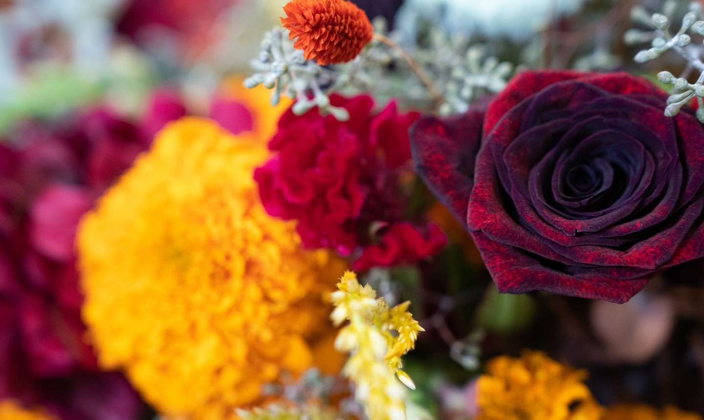 detail shot of fall flowers