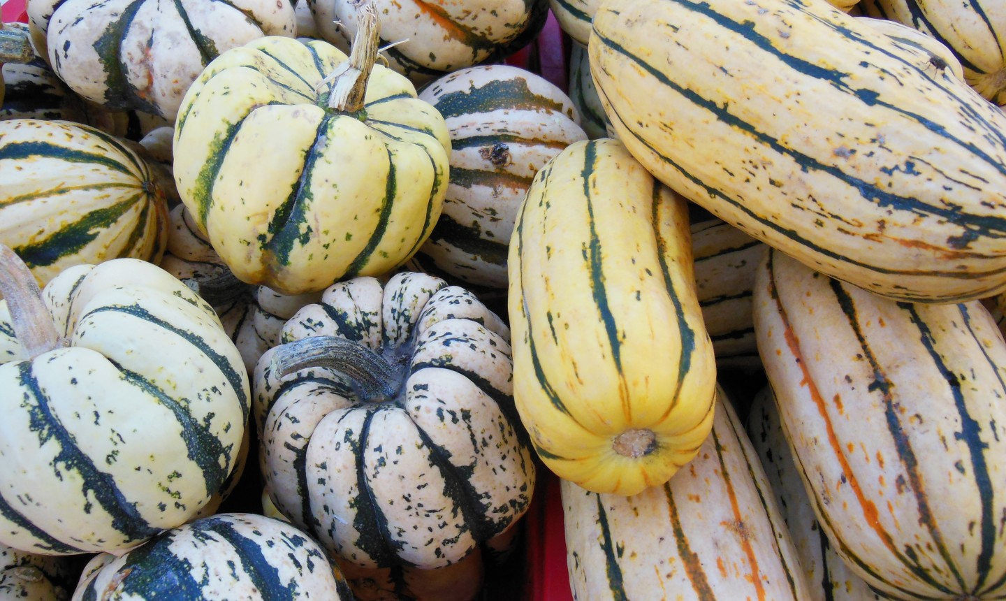 fall squash and gourds