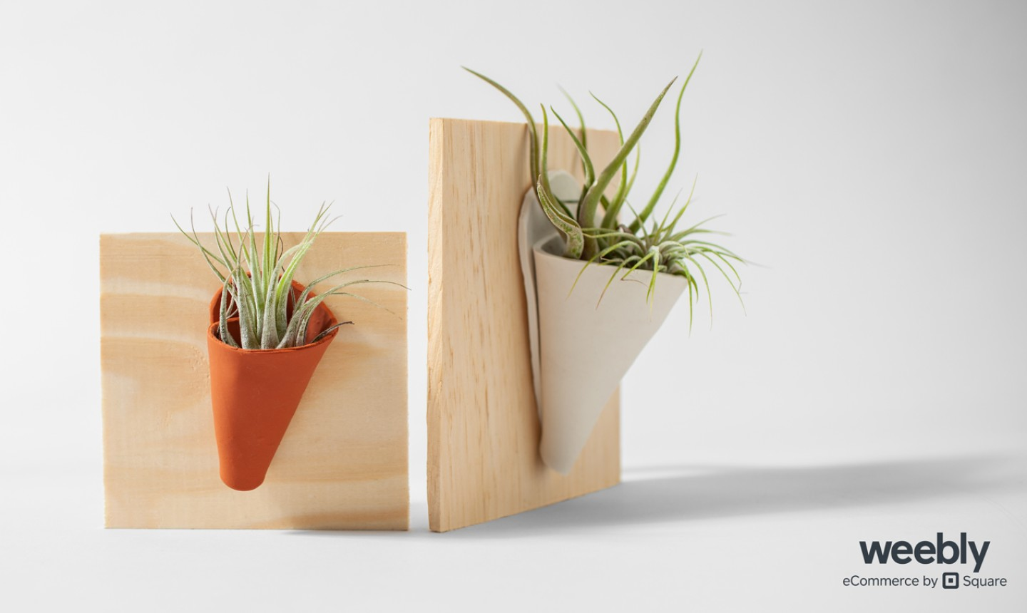 succulent clay planters