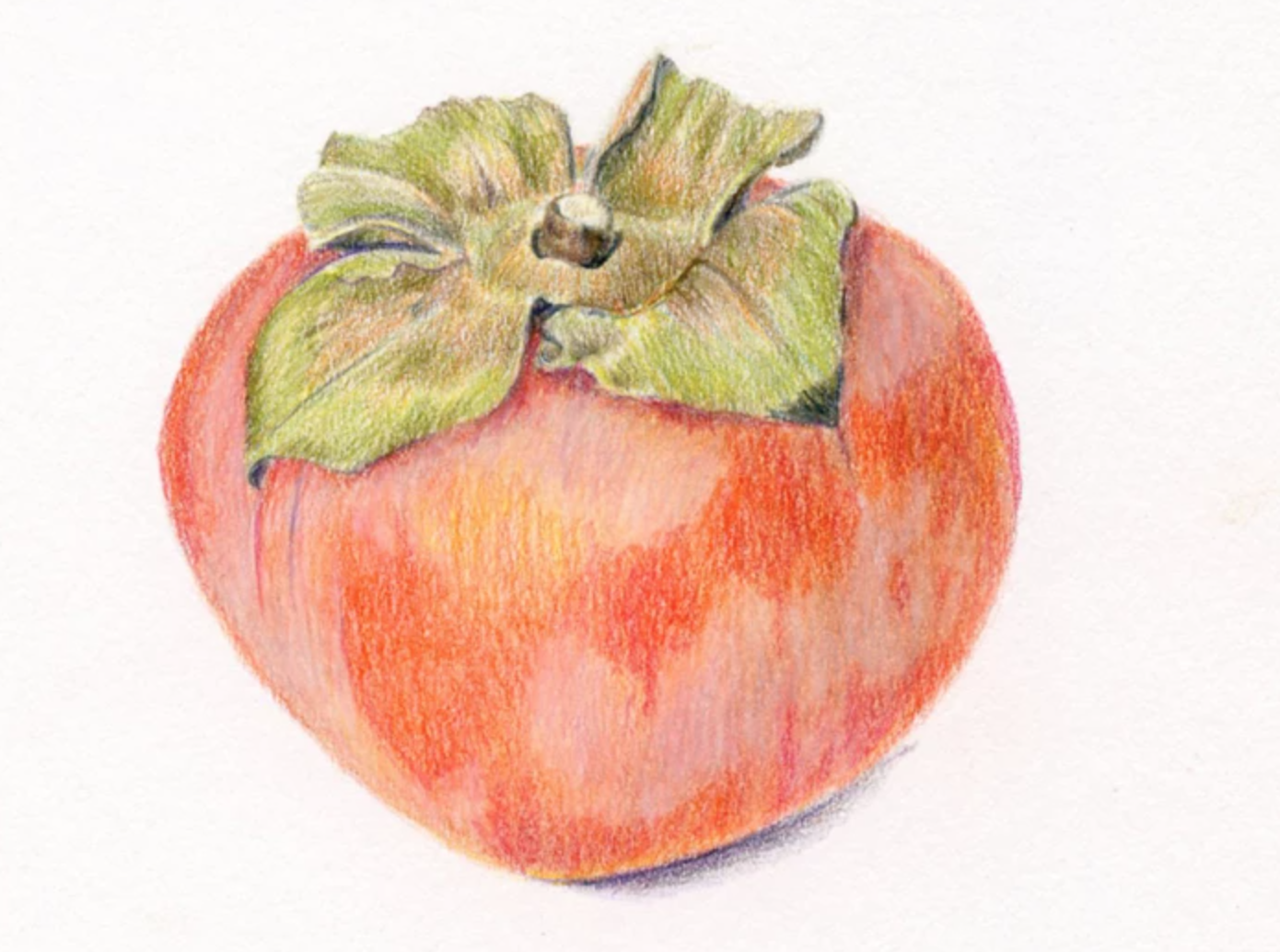 colored pencil persimmon