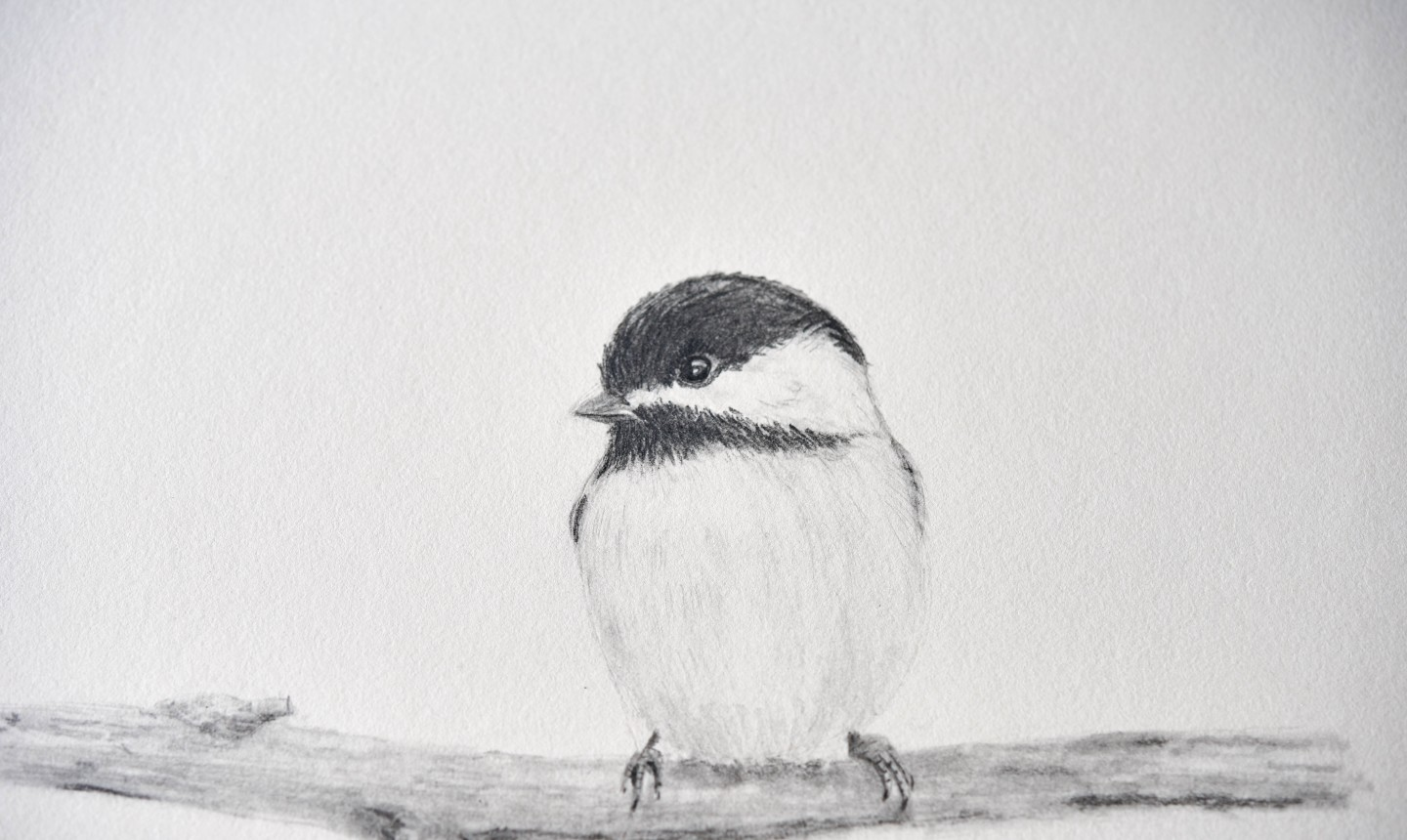 chickadee drawing
