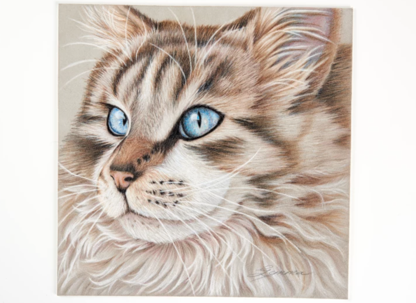 realistic colored pencil cat drawing